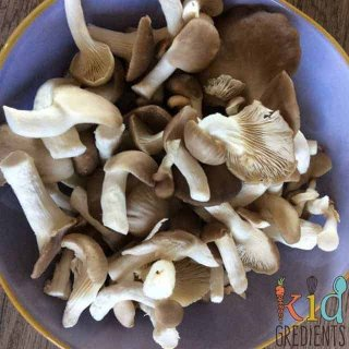 get growing with a mushroom farm